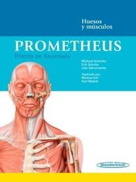 """Prometheus. Póster de Anatomía. (59 por 1,59) """"Huesos y músculos"""""""