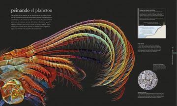 """Océanos """"El mundo secreto de las profundidades marinas"""""""
